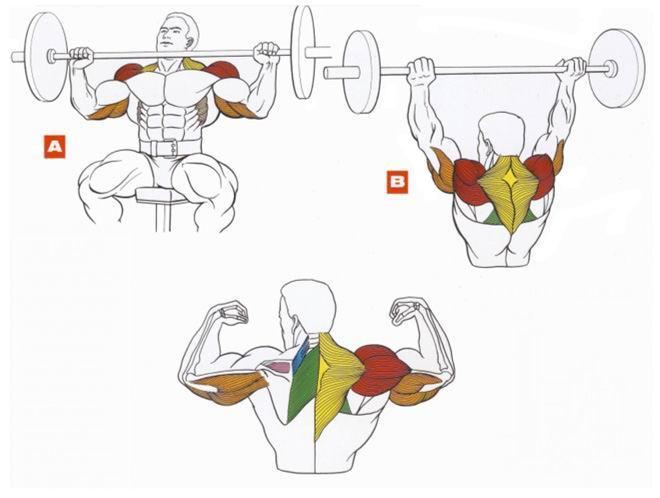 Упражнения на плечи и трапеции. Все упражнения с подробным описанием в мен