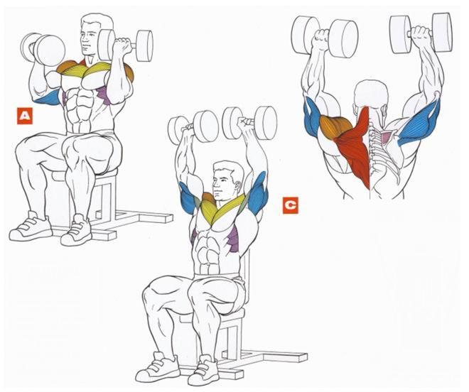 узнать, лучшие упражнения для дельтовидных мышц картинки любом случае, заключение