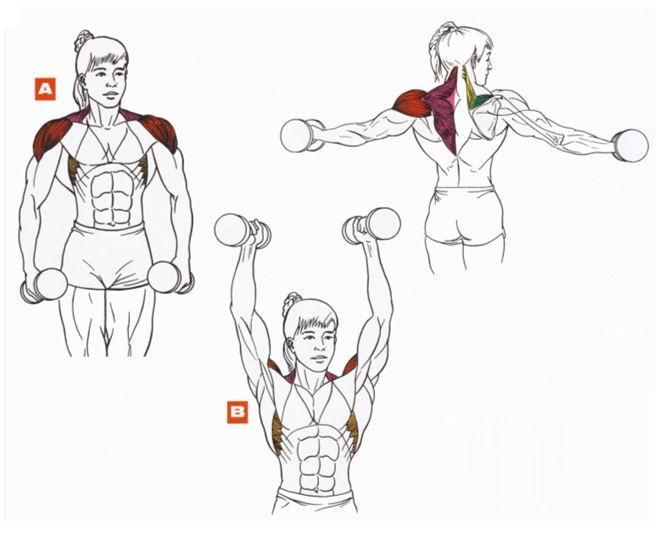 Упражнения для мышц на руках картинки