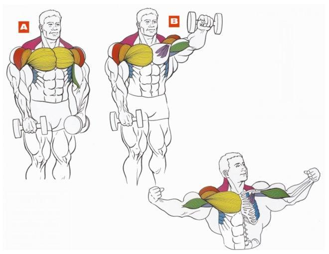Как накачать мышцы дома лучший комплекс упражнений с. Накачать руки в домаш