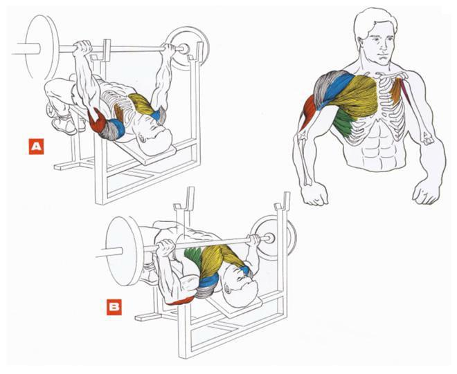 Жим штанги на скамье с наклоном вниз. Упражнения на грудные мышцы.