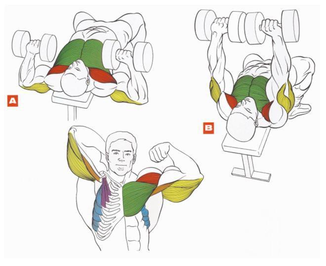 Качать мышцы. Диеты. спортвинео питание. накачать грудь. накачать кисть. н
