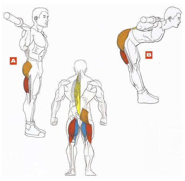 Упражнения для тренировки спины в домашних условиях